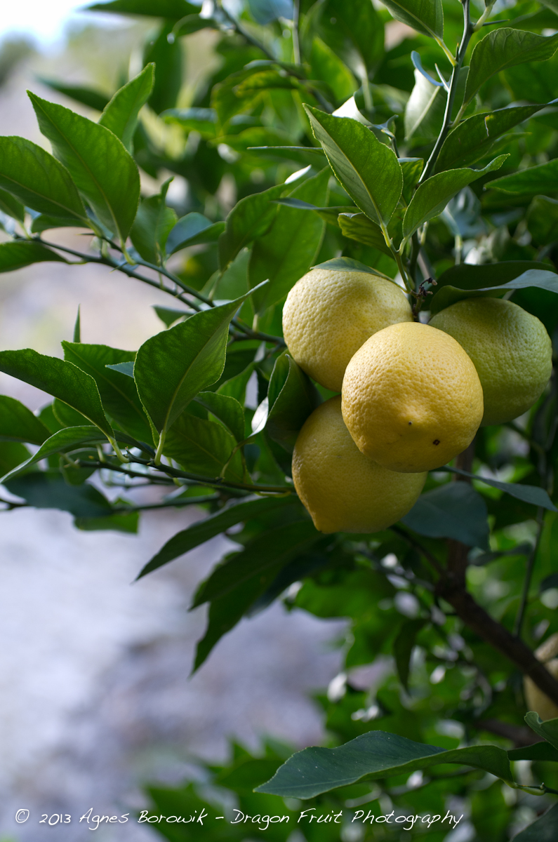 dragonfruit_photography_garda-15