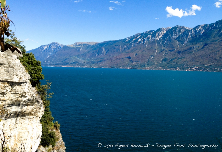 dragonfruit_photography_garda-25
