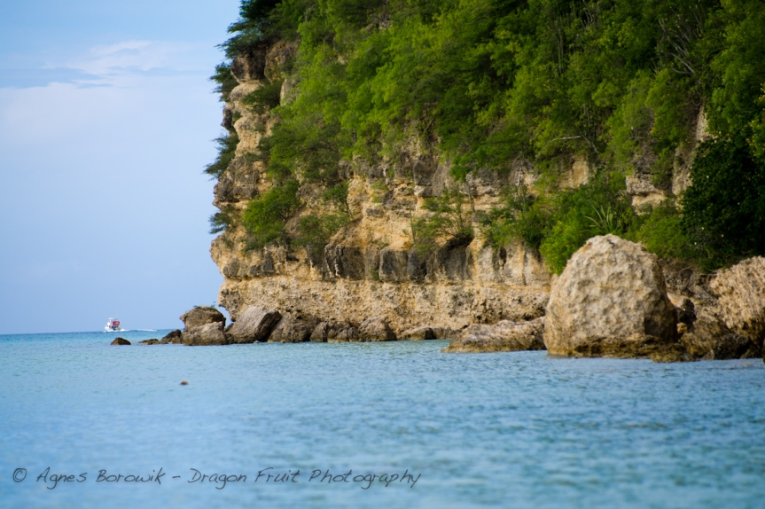 antigua_dragonfruit_photography-13