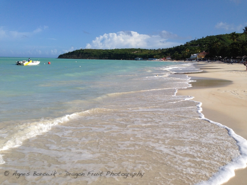 antigua_dragonfruit_photography-20