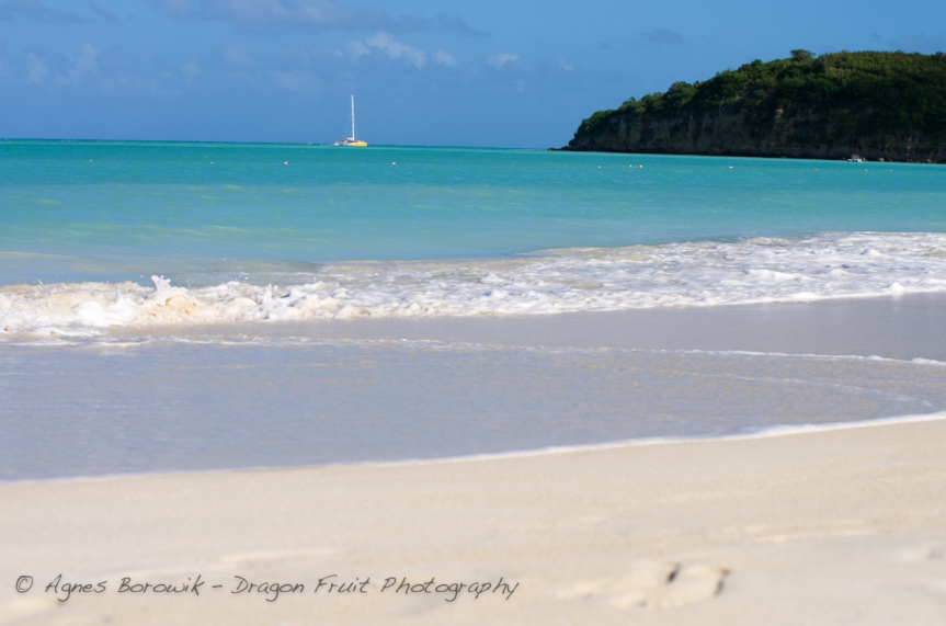 antigua_dragonfruit_photography-21