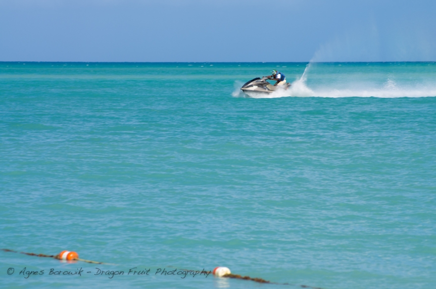 antigua_dragonfruit_photography-4