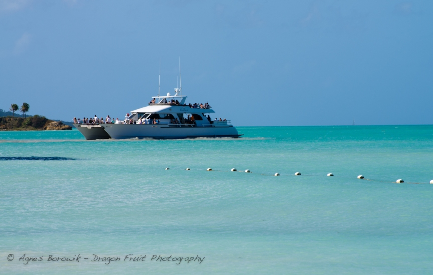 antigua_dragonfruit_photography-5