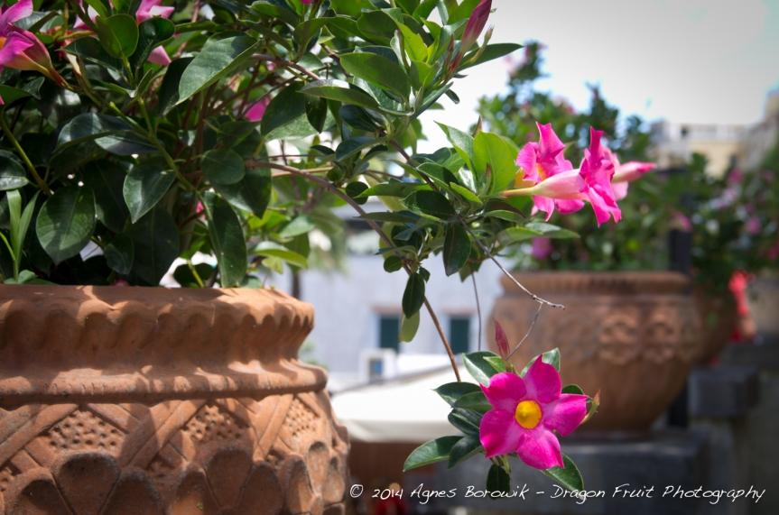capri_italy_agnes_borowik_dragonfruit-3