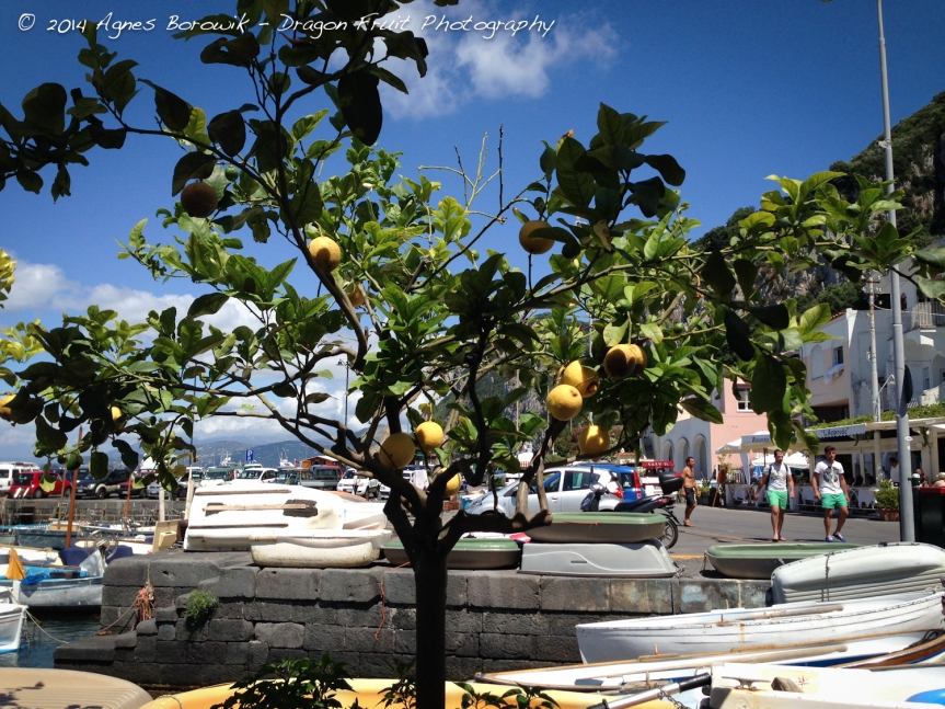 View of a lemon tree and the harbour while dining at great restaurant.