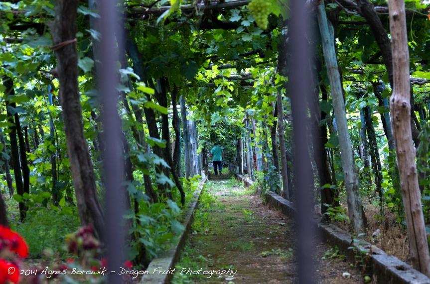 Ravello_agnesborowik_dragonfruitphotograhy-4